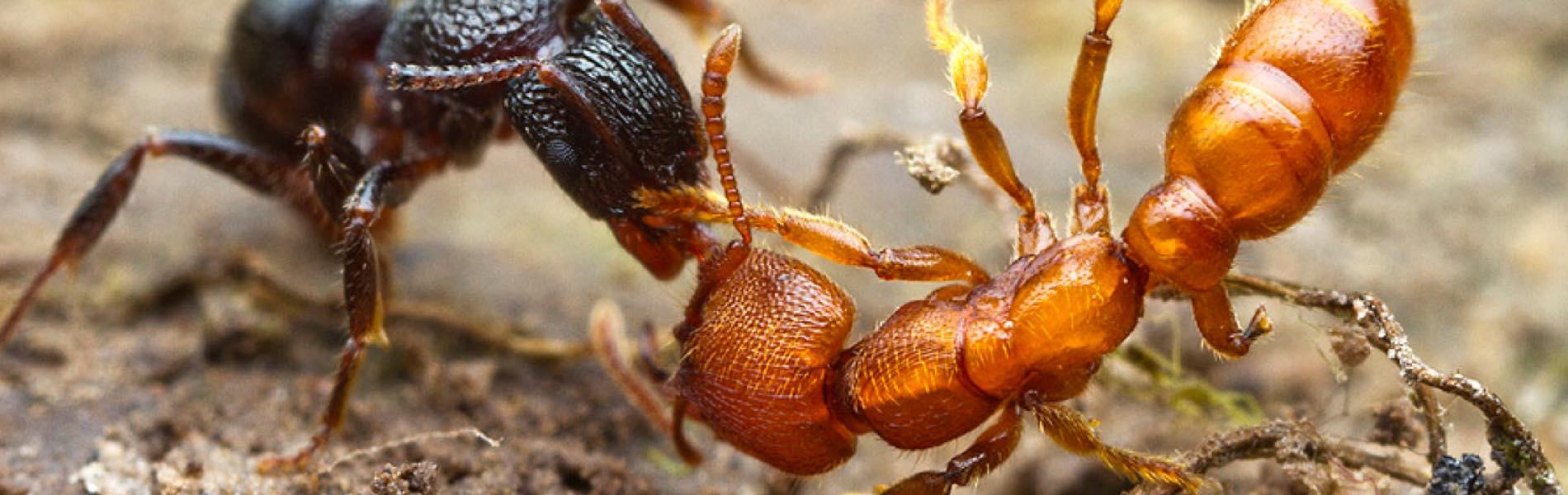 ants-blog